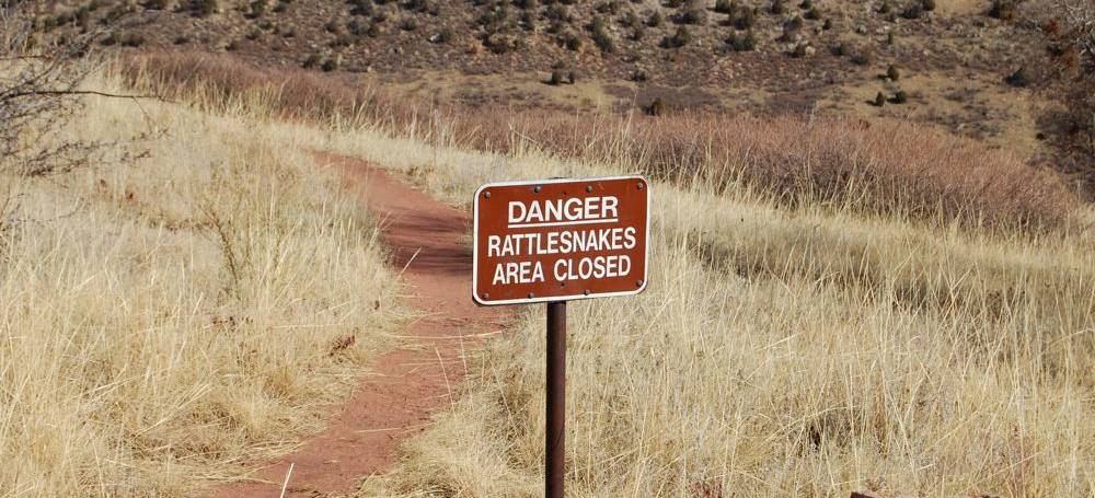 Photo Tuesday-Rattlesnakes