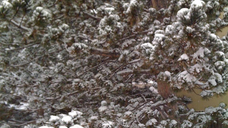 Quick Snow Report