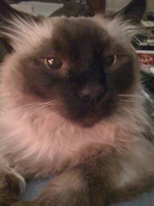 R.I.P. Dakota the Cat, 1994 &#8211; 2012