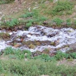 thumbnail of a stream