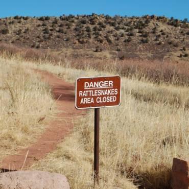 Photo Tuesday-Rattlesnakes